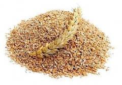 Offer from Ukraine: Wheat bran