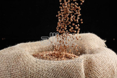 Buckwheat kernel brown