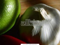 Winter garlic
