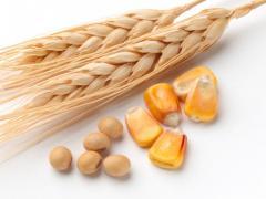 Зерно кукурузы, пшеницы и сою не ДСТУ