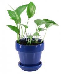 Средства защиты растений химические