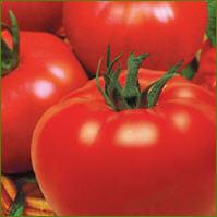 Семена томатов детерминантных.
