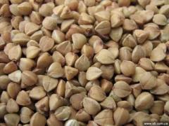 Buckwheat, buckwheat flour, grain wastes