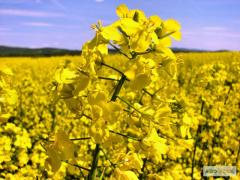 Seeds of winter colza Bayer 2012-14 PRICE