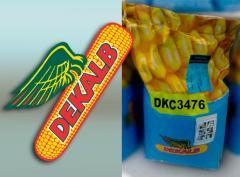 Monsanto DKS 3476 (Fao 260)