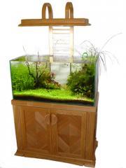 Домашний аквариум на заказ