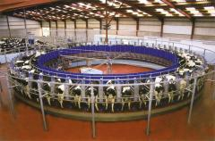 Milking ROUNDABOUT hall