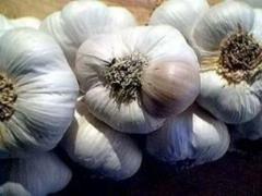 Ukrainian garlic grade Sofiyevsky