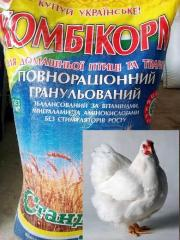 Compound feed for broilers, growth, TM
