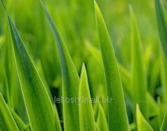 Зеленая трава отдушка