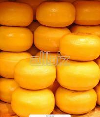 Сыры твердые купить, сыр Российский, сыр