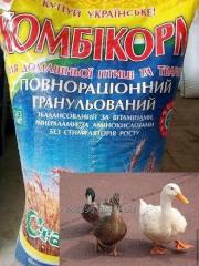 Compound feed for an utoka of geese, growth of TM
