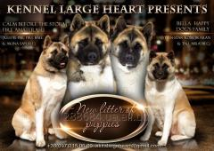 Puppies of the American Akita