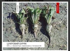 New regulator of growth of plants Greynaktiv-S