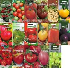 Seeds of vegetables: Tomatoes. Good and unusual