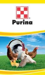 Gotovy forage of TM Purina for god_vl_ _ndik_v