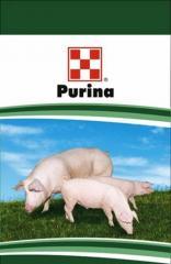Gotovy forage for pigs. Bazova TM Purina program