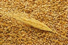 Sell ​​wheat fodder according to GOST 3768: 2010