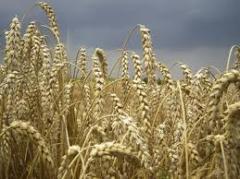 Зерновые, бобовые и крупяные культуры,