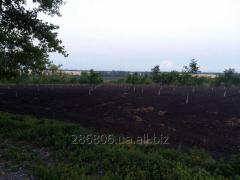Ореховый сад Николаевская область 56 га