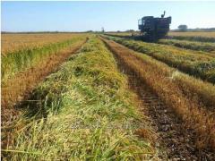 Рисовое хозяйство