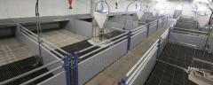 Equipment for pig-breeding, equipment for pigsties
