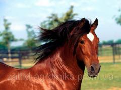 Комбикорма для лошадей