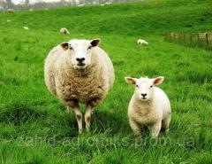 Комбикорма для овец