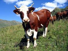 Концентраты для коров