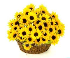 Sunflower oil water-soluble, VRM sunflower from 1