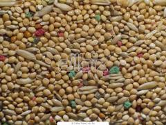 Dry feed for birds