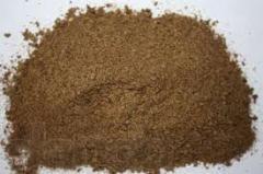Kvass grain dry