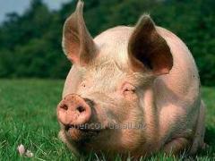 БМВД Шен Пиг Уни Фат Golden Pig 15-10%