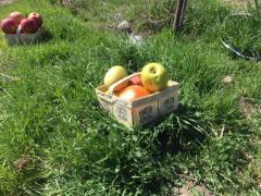 Fruit baske