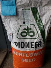 Семена подсолнечника Пионер (Pioneer) пр64ле25