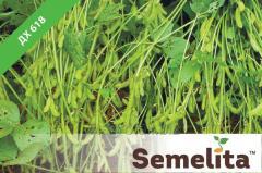 Семена сои ДХ 618