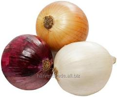 The ONIONS which are NOT PEELED