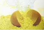 Сухой яичный белок