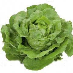Насіння салатів