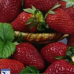 Семена земляники Али Баба Hem Zaden 0.2г