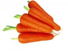 Семена моркови 1л.4 - 1.6мм Seminis 1000000семян