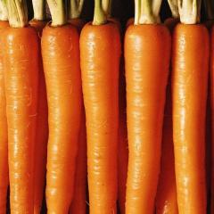 Морковь сортотип Престо нантская Vilmorin 25000семян