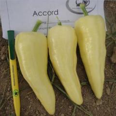 Семена перца Аккорд F1сладкого раннего Hazera 1000семян