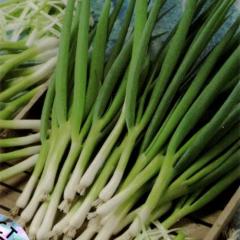 Семена лука Параде на перо Bejo 50000семян
