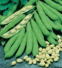 Семена бобов овощных Бьянко Anseme 10г