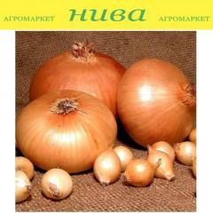 Лук Штутти Желтая Арпаж Top Onions весовая