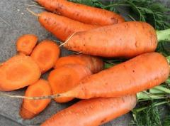 Морковь сортотип Катрин Шантане Agri Saaten 50г