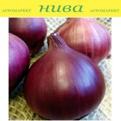 Красный лук Ред Барон Арпаж Top Onions...