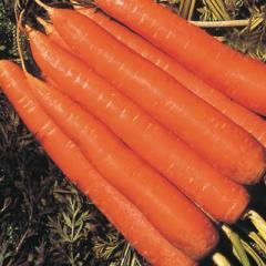 Морковь сортотип Нантиндо F1 Нантская Clause 500г