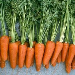 Морковь сортотип Ред Коред F1 Шантане Lark Seeds 500г